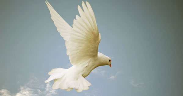 Information on the Holy Spirit?